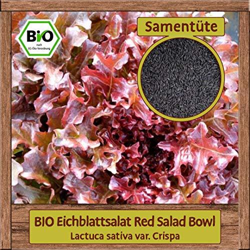 BIO Salat Samen (Lactuca sativa), Eichblattsalat Baby Leaf geeignet, hell-roter Schnittsalat, Pflücksalat Gemüse Samen