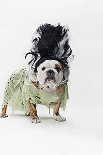 English Bulldog as The Bride of Frankenstein Photo Photograph Cool Wall Decor Art Print Poster 24x36