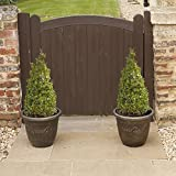 YouGarden Buxus Topiary Plants Pyramids (Pair)