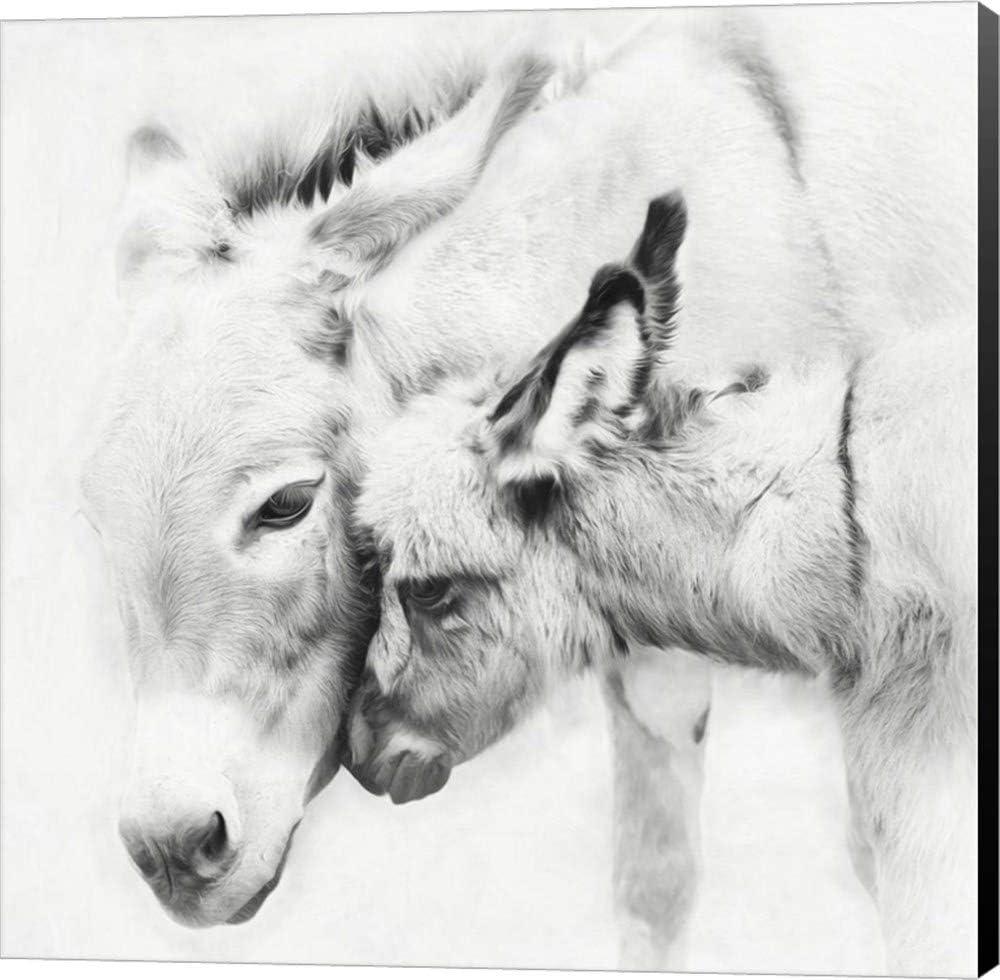 Donkey Portrait 40% OFF Cheap Sale Special sale item III by PHBurchett Wall Picture Art Canvas Museu