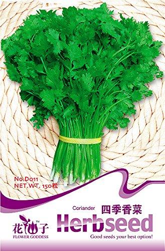 Coriandrum sativum Graines 150pcs / sac, forte odeur d'herbes, graines de coriandre Four Season facile des plantes comestibles Bonsai Plante