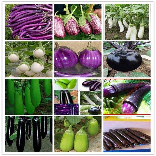 200pc Aubergine Seeds: 700Pc monde le plus complet quatre types de légumes et de graines de fruits. (Radis, aubergines, poivrons, tomates graines) Colorful Garden