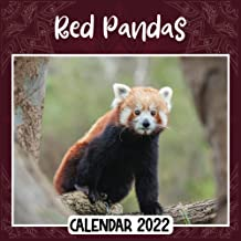 Red Pandas 2022 Calendar: Red Pandas mini calendar 2022 2023, Red Pandas 2022 Planner with Monthly Tabs and Notes Section,...