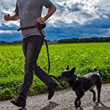 Joggingleine   Premium Hundeleine 120cm Bis 200cm   Elastisch Reflektierend Reißfest Gepolsterter Hüftgurt Hüftbeutel   Freihändig Laufen Spazieren Wandern - 3