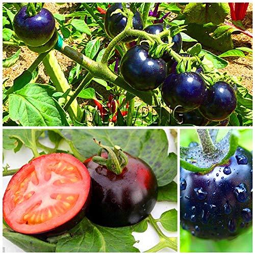 Pinkdose Verlust Promotion!seltener frischer & schwarzer Prinz & quot; Tomaten Bonsai - 100% biologische und nicht gentechnisch veränderte Pflanzen Obstgemüse, 200SEED