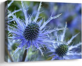 Wall Art Canvas Print Photo Artwork Home Decor (24x16 inches)- Sea Holly Flower Eryngium Plant Flower Blue