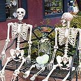MMLC Halloween Party Dekoration beweglich voller Größe menschlicher Schädel Skelett anatomisch