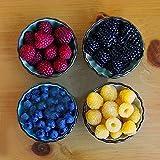 KINGDUO 400 Piezas/Paquete Mixto Color Frambuesa Semillas Cada 100 Pc para La Semilla De Fruto Amarillo Rojo Negro Azul