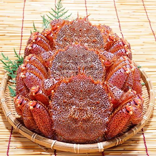 かにのマルマサ 北海道産 活毛蟹 550g 3尾セット 冷蔵品