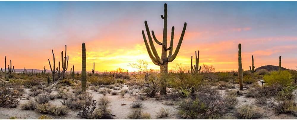 Beauty products Laeacco 15x8ft Huge Saguaro Colorado Springs Mall Cactus Sunset Backdro Sunrise Scenic
