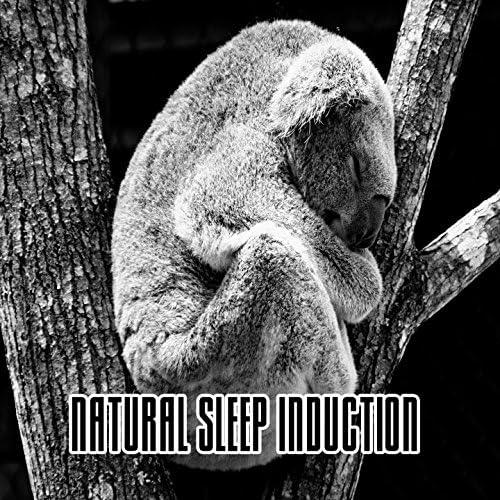 Dormir, Dormir Bien & Musica para Dormir Dream House