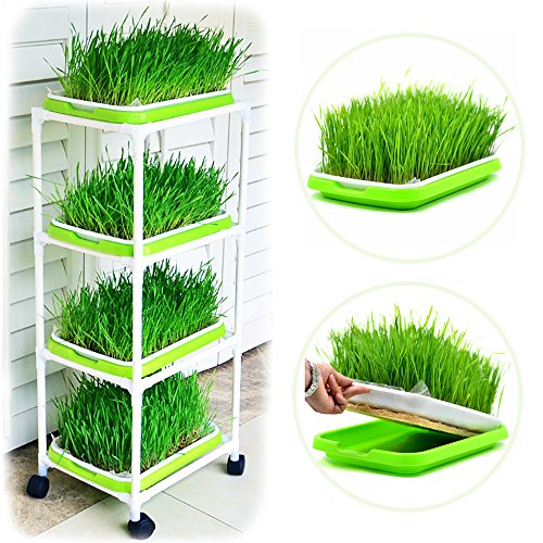 Seed Sprouting Trays 4-Tier Plastic Shelving Display Stand with Universal Wheels for Wheatgrass Sprouter Germination Trays
