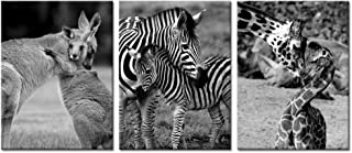 Best kangaroo pictures black and white Reviews