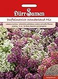 Dürr-Samen Dufteinstrich Wonderland Mix
