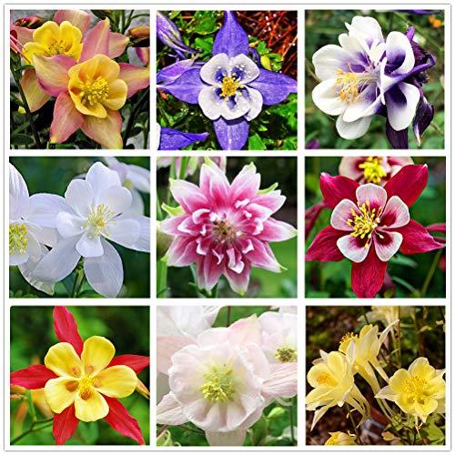 Columbine Mix(100+)Seeds Flowers Easy to Grow Planting for Outdoor Indoor...
