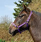 Rhinegold Nylon Headcollar-COB-Purple Cuello, Morado