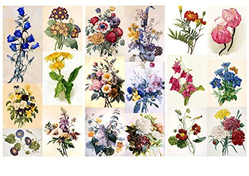 Decoupage Paper Pack (12 Sheets A4 / 8x11) Flowers Redoute Wildflowers FLONZ Vintage Ephemera