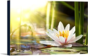 Lotus Flower In Sunshine Photography A-91878 (36x24 Gallery Wrapped Stretched Canvas)