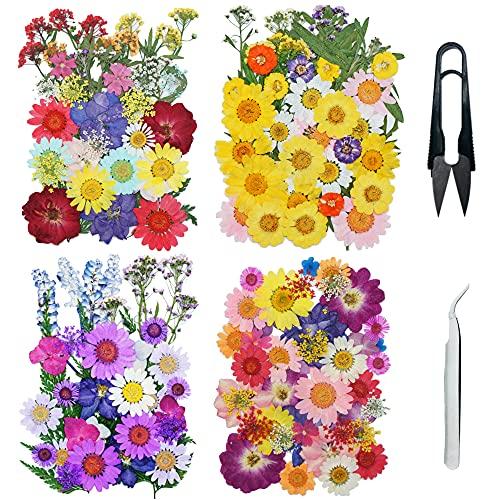 Cayway 160 PCS Bricolage Fleurs Séchées Ensemble avec Pince à Epiler et Ciseaux, Fleurs Pressées Séchées Fleurs Sechees Naturelles pour L'artisanat d'art de Bricolage, Les Bijoux en Résine Epoxy