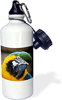 3dRose Blue Gold Parrot Macaw Head Tilted-Sports Water Bottle, 21oz (wb_178428_1), 21 oz Multicolored