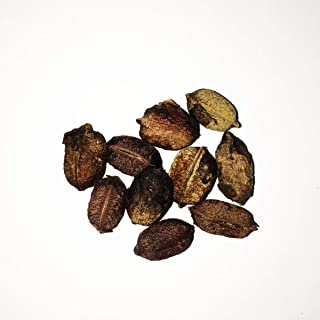Herb Seeds Eurycoma Longifolia Tongkat Ali (AKA Longjack, Eurycoma Longifolia, Malaysian Ginseng) (10)