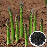 Asparagus Seed - 20PCS Garden Vegetable Asparagus Officinalis Seeds by...
