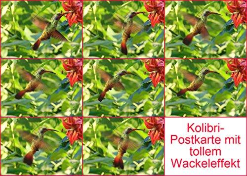 Lentikular-Postkarte mit Wechselbild/Wackelbild (Flip) Kolibris: