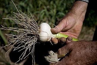 Best italian hardneck garlic Reviews