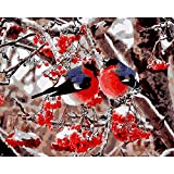 Pintura al óleo de Bricolaje,Pintura por números,Pareja de pájaros de la selva de nieve Pintar por Numeros Adultos Niñost Principiantes, para hogar decoración de casa (sin marco) 40 x 50 cm