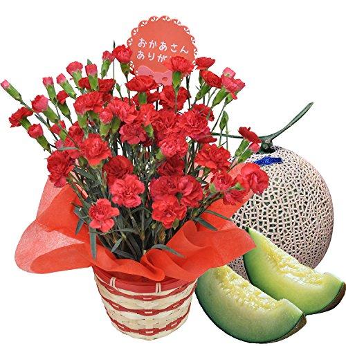母の日 フルーツ ギフト カーネーション5号鉢とツル付きアールスメロンセット (赤)