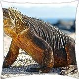 Komodo Waran–Funda de almohada manta (18'x 18)