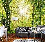 murimage Papel Pintado Bosque 3D 274 x 254 cm Incluye Pegamento Fotomurales Vista madera árboles luz del sol living sala