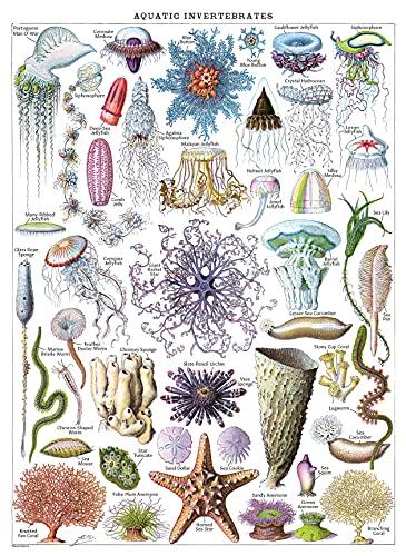 Vintage Jellyfish & Aquatic Invertebrates Poster Print - Marine Life Identification Reference Chart (LAMINATED, 18' x 24')