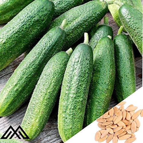 50 Samen Partner F1 Gurke - pelletierte Samen,Gemüse Samen ertragreich mehrjährig winterhart für Garten Balkon/Terrasse
