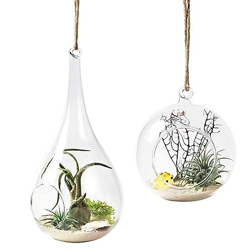 Hanging Succulent Terrarium Amazon Com