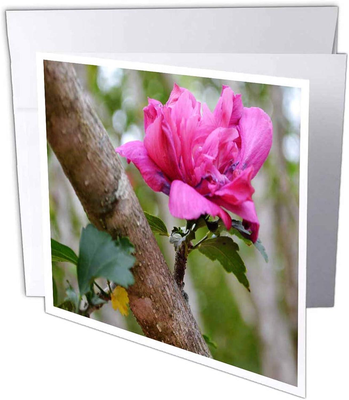3dRosa 3dRosa 3dRosa gc_33094_1 Grußkarte Rosa of Sharon-0113 , 15,2 x 15,2 cm, 6 Stück B07BJDVXGN | Elegante Form  | Lass unsere Waren in die Welt gehen  | Langfristiger Ruf  70ca34