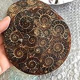 MCWJ Amonita Natural Caracol de mar brújula fósiles minerales Piedras Preciosas Piedras curativas decoración Fina-Aproximadamente 120 mm