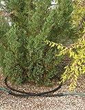 Gardener's Supply Company Landscape Watering Snip-n-Drip Soaker System