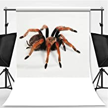 Tarantula on White Photography Background,148848 for Photography,Pictorial Cloth:5x7ft