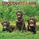 Chocolate Labrador Retrievers - Braune Labradore 2020 - 16-Monatskalender mit freier DogDays-App: Original BrownTrout-Kalender [Mehrsprachig] [Kalender] (Wall-Kalender)