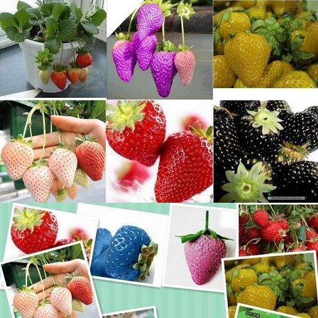 1500 graines 15 Types de Graines Fraise Noir, Blanc, Jaune, Bleu, Rouge, Giant, orange, pruple, vert usine de fruits de jardin navire libre