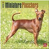 Miniature Pinschers 2014 - Zwergpinscher: Original BrownTrout-Kalender [Mehrsprachig] [Kalender]