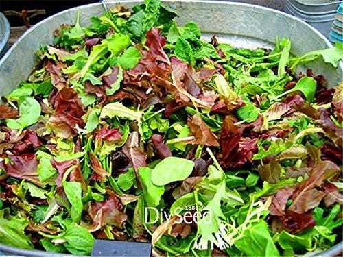 100 Pieces / Graines Lot Nouveau fraîches Graines Mesclun Mix, Tous Salade Mix, facile à cultiver des semences de légumes