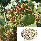 Semillas de pistacho para plantas de jardinería, 5 piezas raras de pistacho vera, bonsái, decoración para plantación al aire libre de Zhouba, Semillas
