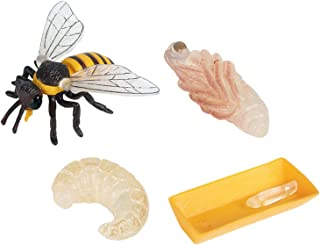 Generic 4 Pieces Plastic Nature Bee Growth Cycle Child Education