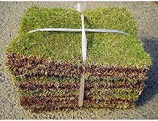 相馬グリーン 高麗芝 1束 ポピュラーな日本芝