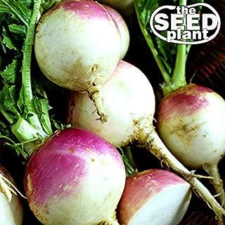 Purple Top White Globe Turnip Seeds – 1000 Seeds Non-GMO