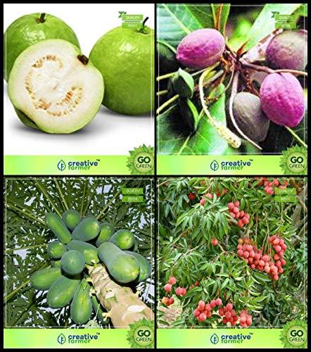 BloomGreen Co. Semer Combo Arbre Graines: Goyave, Mer-amandes, la Papaye, Litchi Arbre Graines Cuisine Paquet Jardin