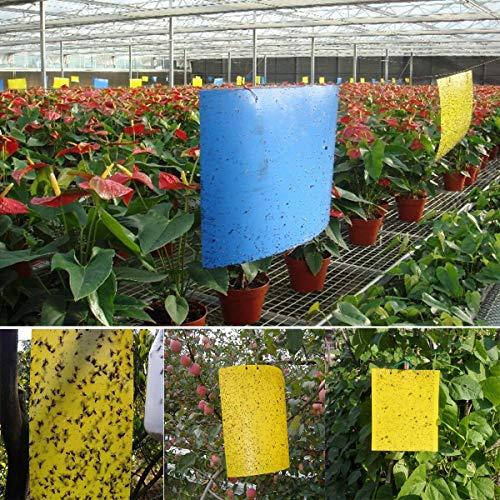 40 Sticker, Gelbtafeln und Blautafeln Fliegenfallen Klebrige Insektenfalle - 6