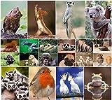 """""""LUSTIGE TIERE IV"""": 20-er Postkarten-Set mit lustigen und süssen Tieren"""